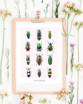 Eco ansichtkaart insecten duurzame ansichtkaarten