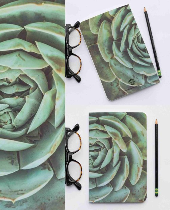 Schrift recycle succulent