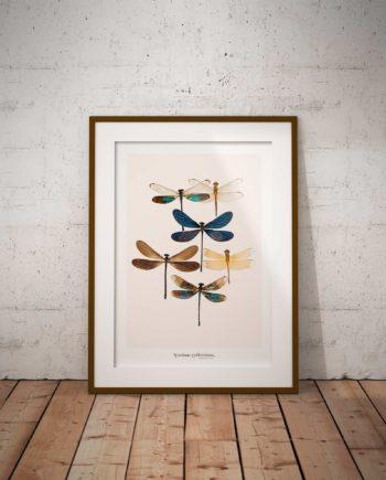 Poster Libelle Voor Aanzicht