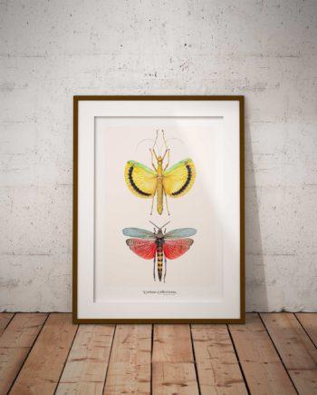 Poster Insect Vintage Voor Aanzicht