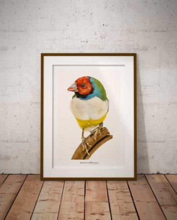 Poster Kleurrijke Vogel Voor Aanzicht