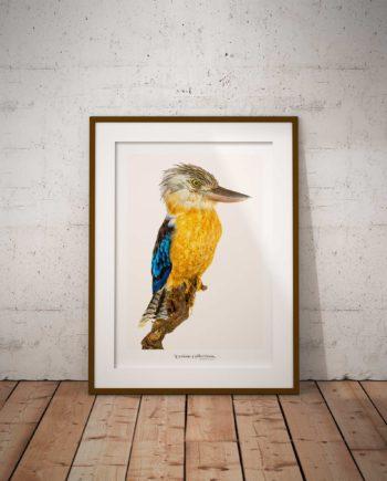 Poster Vogel Voor Aanzicht