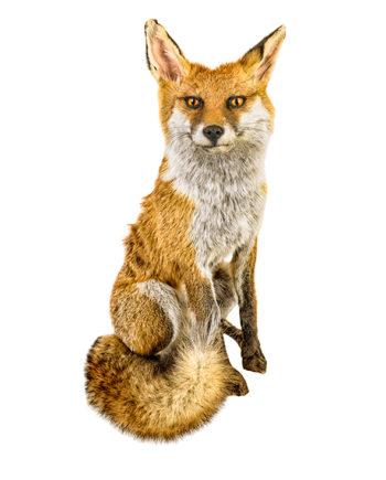 duurzame kaarten vos