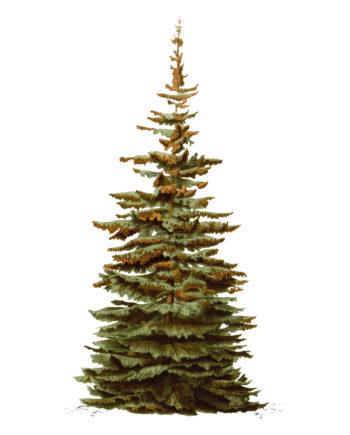 Duurzame kerst met FSC kerstkaarten