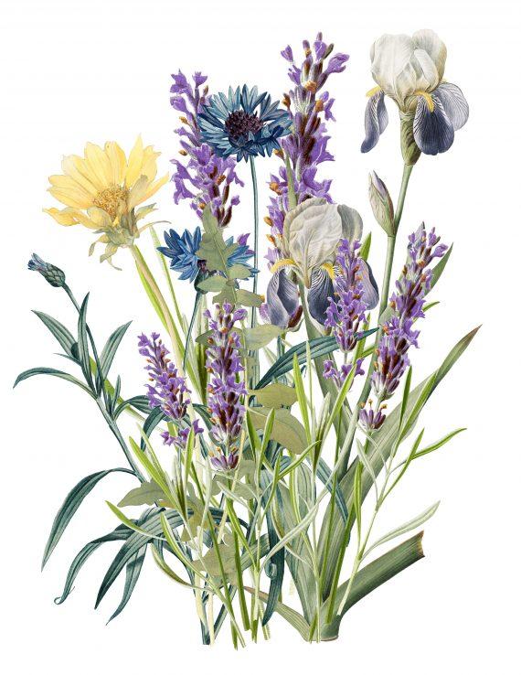 Duurzame kaart wilde bloemen