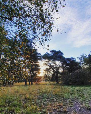 HAPPY MORNING 💛 THE SUN IS UP! . . . . . . #mookstories#theoutsiders#modernoutdoors#riel#visuals#visitbrabant#dutchwoods#goldenhour#goldenhourinseptember#wanderlust#wanderer#liefleven#naturephotography#visuals#intothewild#rsa_streetview#rsa_rural#naturelovers#natuurfotografie#wildandfree#exploremore#goneoutside#heritage#buitenleven#romanticview#misty#liveauthentic#earthexperience#secretescape#stayvacation#dutchcaptures