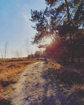 Aan het einde van de dag.. 💛 . . . . . . #mookstories#theoutsiders#modernoutdoors#riel#visuals#visitbrabant#dutchwoods#goldenhour#goldenhourinseptember#wanderlust#wanderer#liefleven#naturephotography#visuals#intothewild#rsa_streetview#rsa_rural#naturelovers#natuurfotografie#wildandfree#exploremore#goneoutside#heritage#buitenleven#romanticview#misty#liveauthentic#earthexperience#secretescape#stayvacation#dutchcaptures