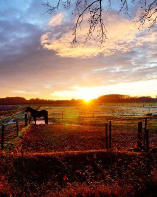 Samen starten we de ochtend 💛 . . . . . . . . . . . . #mookstories#theoutsiders#modernoutdoors#riel#visuals#visitbrabant#dutchwoods#goldenhour#goldenhourinseptember#wanderlust#wanderer#liefleven#naturephotography#visuals#intothewild#rsa_streetview#rsa_rural#naturelovers#natuurfotografie#wildandfree#exploremore#goneoutside#heritage#buitenleven#romanticview#liveauthentic#earthexperience#secretescape#stayvacation#dutchcaptures#waterschap